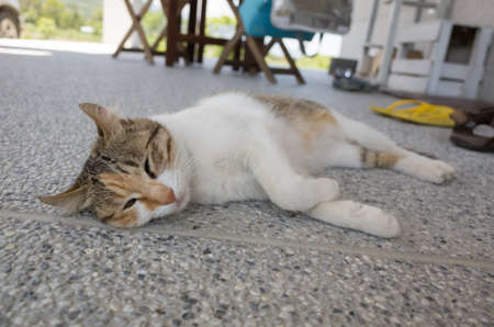 domestic cat sleep on the ground