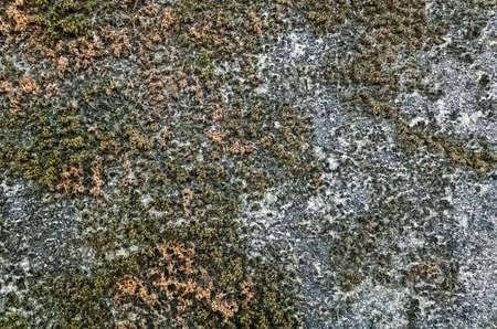 mildewed wall background, grunge texture of dirty cement