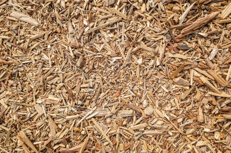 cracked wooden and lumber sawdust on the ground