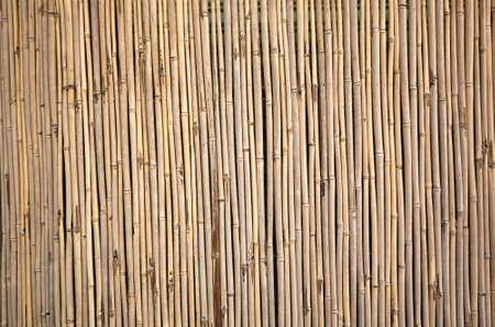 yellow bamboo wall background, traditional homemade fence Banco de Imagens