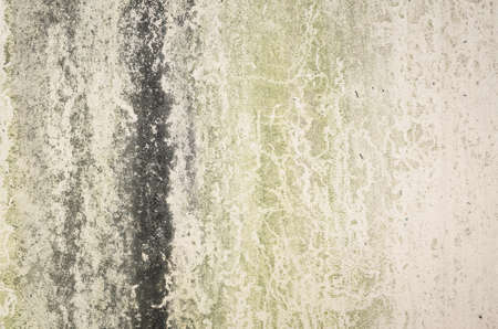 background with moss on wall in grunge style