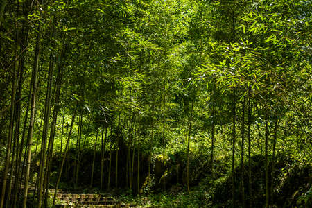 stairs in the forest in Xitou at Nantou counry, Taiwan
