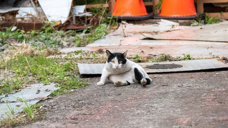 stray cat licking and washing in a funny pose