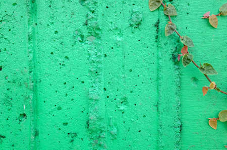 ivy leaves on green cement wall background Foto de archivo - 133538301