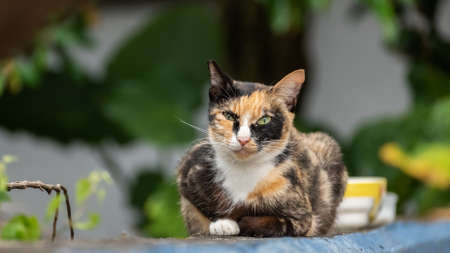 tortoiseshell stray cat at the wall in a city Stock Photo