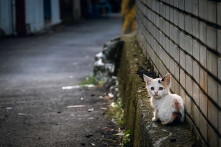 little stray cat sit at a street in the city
