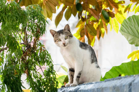 carefully stray cat look at you at the outside