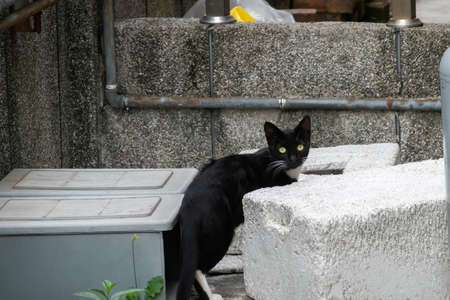 stray black and white cat at the street