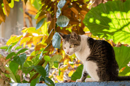 carefully stray cat look at you at the outside Stock Photo