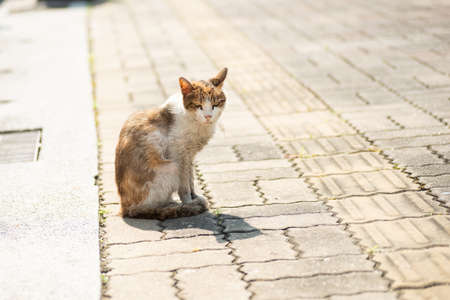 dirty stray cat stand and look at you on the street