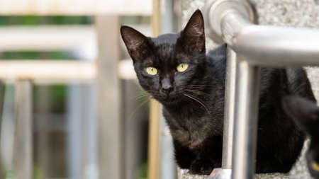 funny stray black   cat at street Stock Photo