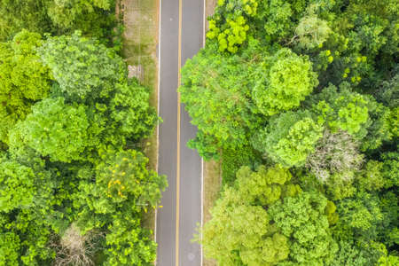 road under forest, aerial view in the daytime