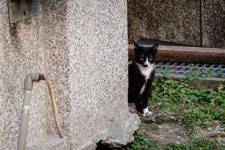 young stray cat at the street in a city