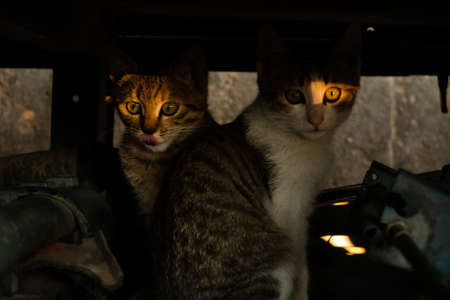 young stray cat with her brothers at the street in a city