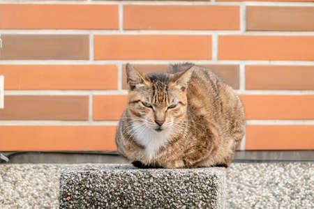 stray tabby cat at the street in city Stock Photo