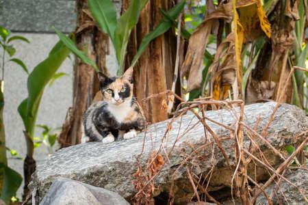 tortoiseshell stray cat at the wall in a city Stock Photo