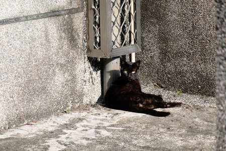 stray black cat sit on the ground at the street