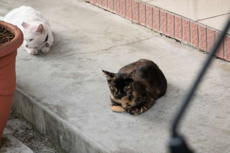 tortoiseshell cat sit and look at you at street