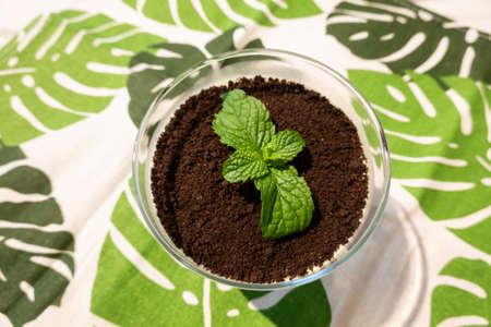 cupcake of green plant on black chocolate, closeup image