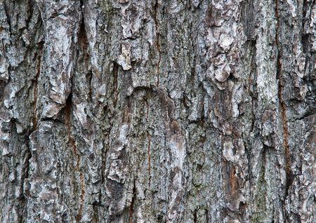 Tree bark details Stock Photo - 6900082
