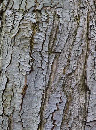 Old rustic tree bark Stock Photo - 6992201