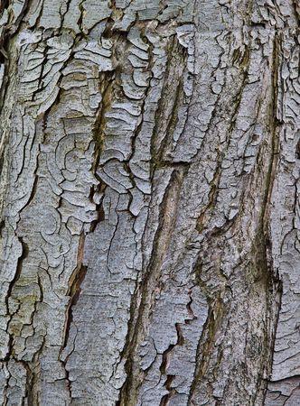 Old rustic tree bark Stock Photo - 6992201