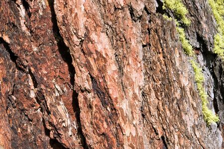 woodsy: Tree bark with moss