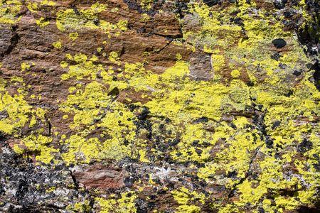 Yellow lichen on a rock photo