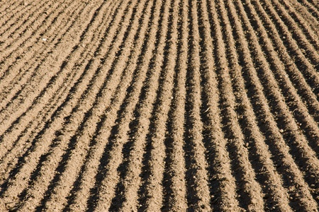 A ploughed field waiting for new crops