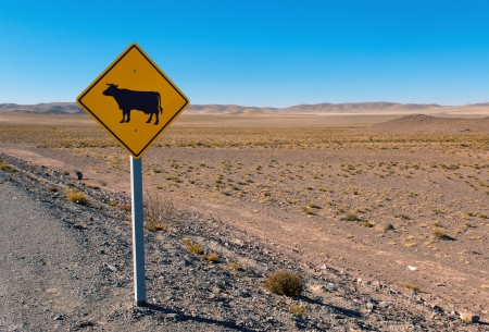 Cow sign in the andes photo