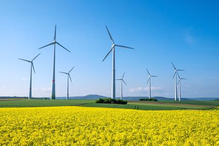菜の花と windwheels
