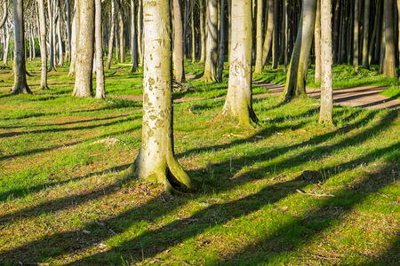 Tree trunks and shadows photo