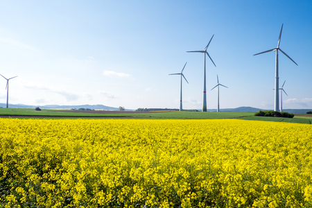 nonpolluting: Rapeseed Stock Photo