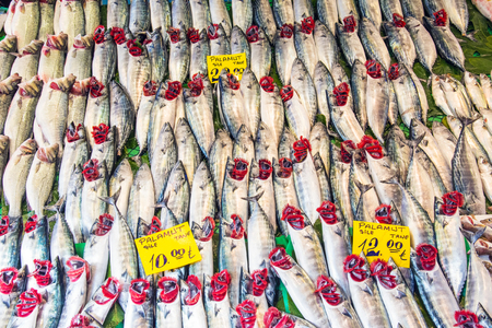 kadikoy: Plenty of fish at a fish market in Istanbul, Turkey