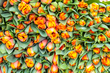 Bouquet of beautiful tulips for sale at a market