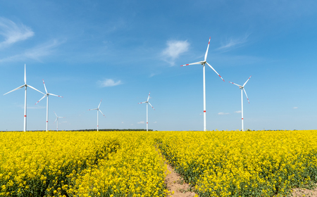 Blooming rapeseed field with wind turbines in the back lake in Germany Stock Photo