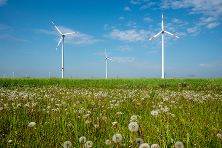 Wind power plants and dandelion flowers lakes in Germany