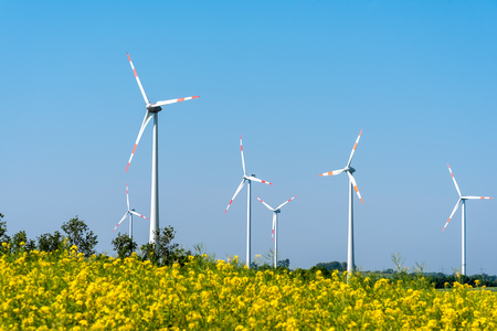 Blossoming rapeseed with wind turbines at the back lakes in Germany