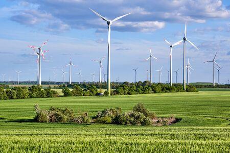 Wind turbines behind a green corn field lakes in Germany Archivio Fotografico