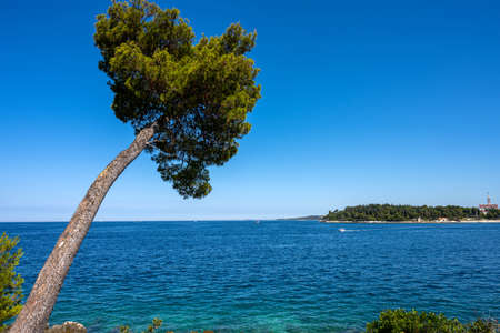 Lovely pine tree by the sea seen in Croatia