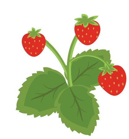 Strawberry fruits with leaves