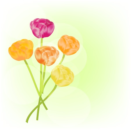Ranunculus vector background Stock Vector - 13696277