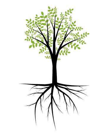 boom wortels: Abstracte decoratieve boom met bladeren en wortels