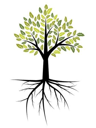 boom wortels: Boom illustratie met sterke wortels