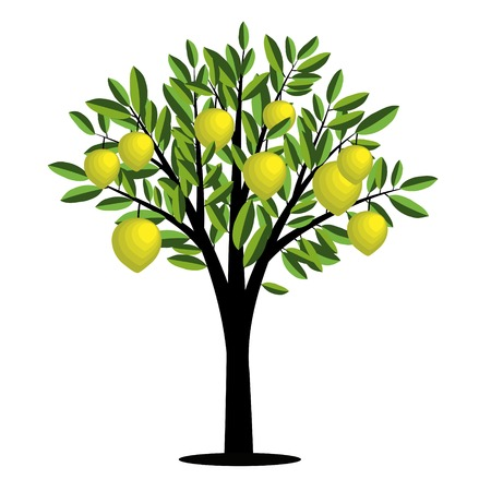 Lemon tree with ripe fruits Vector