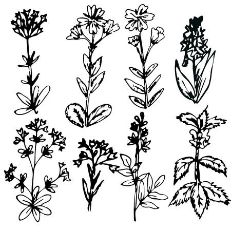 flower fields: Decorative hand drawn flowers collection Illustration