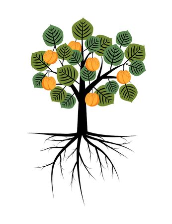 apricot tree: Apricot tree with roots illustration