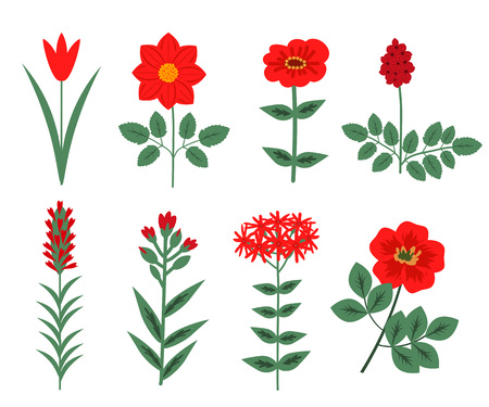 Decorative red garden and wild flowers set
