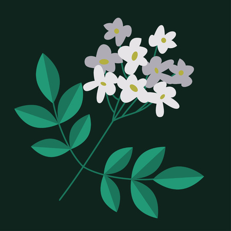 botanica: Flowering branch isolated with white flowers Illustration