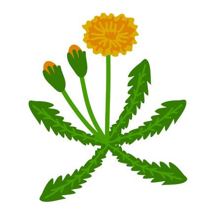 flowering: Dandelion simple flowering plant illustration